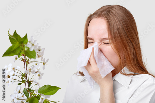 Fotografia  Dissatisfied ill young woman sneezes in tissue, frowns face, has running nose, poses near blossom branch, wears elegant shirt, isolated over white background
