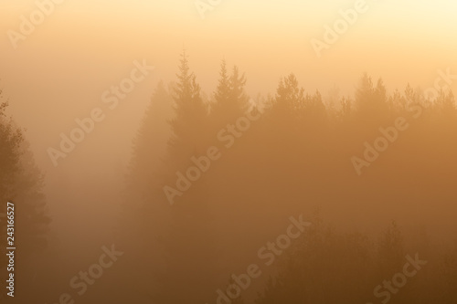 Foto  Early foggy morning forest landscape