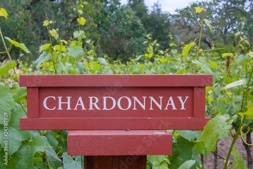 Fotografie, Obraz  Grape Varieties
