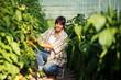 Female farmer harvesting tomato