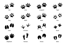 Animals Footprints, Paw Prints...
