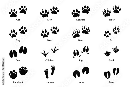 Animals footprints, paw prints. Set of different animals and birds footprints and traces. Cat, lion, tiger, bear, dog, cow, pig, chicken, elephant, horse etc