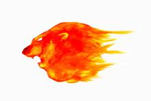 Lion Head Paint By Oil Color