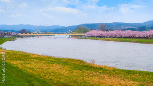 Aluminium Prints New Zealand Iwate , Japan - April 22 2018: Kitakami Tenshochi park located by the Kitakami River, renowned as one of the Three Best Cherry-Viewing Spots in Tohoku region along with Hirosaki and Kakunodate