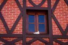 Small White Dove On A Window. Wall Of Red Bricks