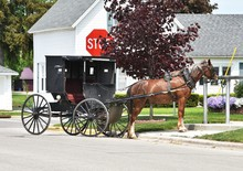 Parked Amish Horse And Buggy