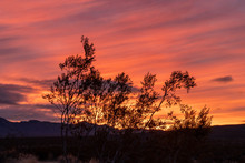 Creosote Bush And Red Burning Sky In The Morning Sunrise, Mojave National Preserve, California