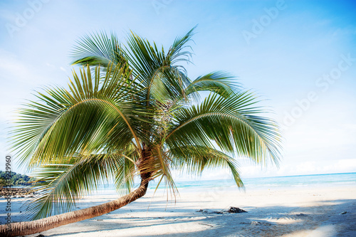 Poster Palmier Coconut tree on sand beach.