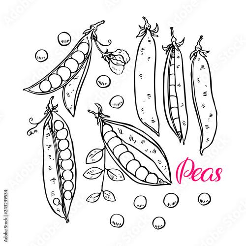 Foto set of ripe peas