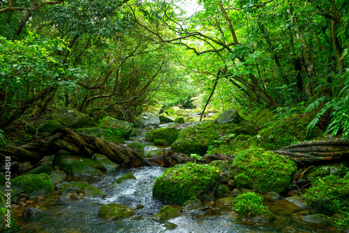 Foto op Plexiglas Groene 西表島のジャングル