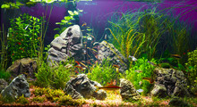 Large Planted Tropical Fresh W...