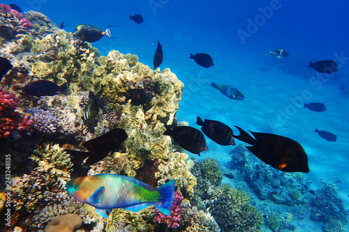 Photo Stands Coral reefs coral reef in egypt