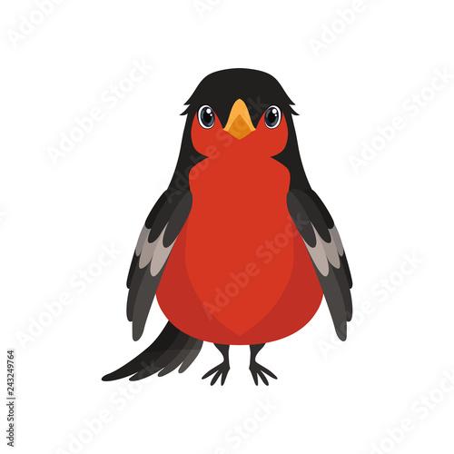 Bullfinch bird vector Illustration on a white background Fototapet