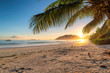 Tropical beach at sunrise with palms in Jamaica island. Summer vacation and travel concept.