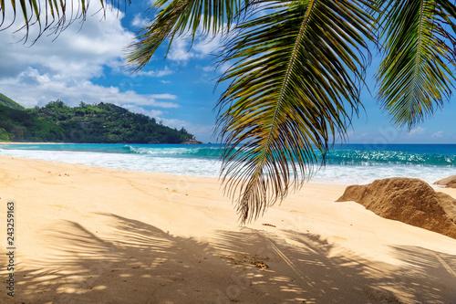 Naklejka premium Piaszczysta plaża z palmami i turkusowym morzem na wyspie Seszele. Letnie wakacje i koncepcja podróży.
