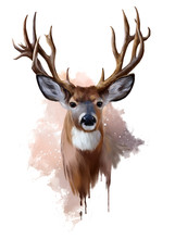 Deer With Spreading Antlers Wa...