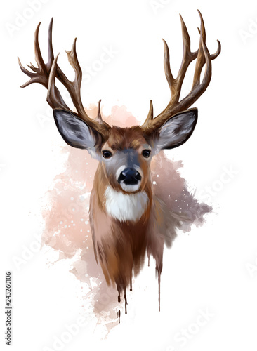 Fotografie, Obraz  Deer with spreading antlers watercolor painting