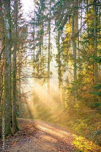 Fototapeten Wald sun rays in a forest