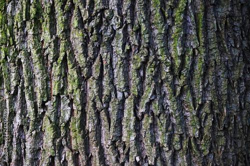 old oak bark texture Canvas Print