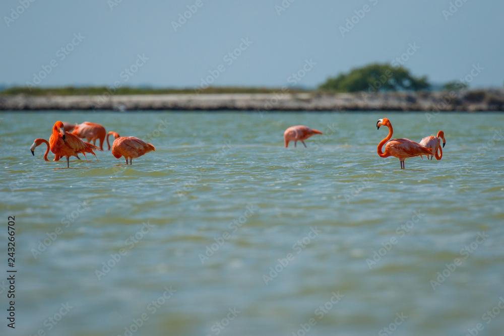 Group of pink flamingos in Las Coloradas in Mexico