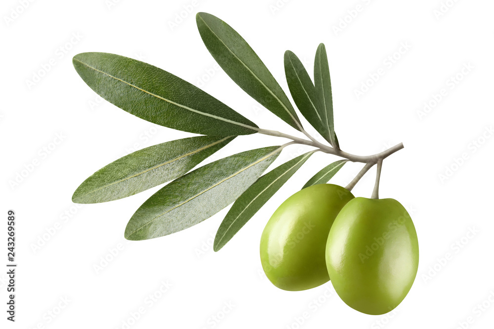 Fototapety, obrazy: Olive branch with two green olives, isolated on white background
