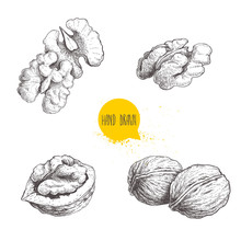 Hand Drawn Sketch Style Walnuts Set.  Single Whole, Half And Walnut Seed. Eco Healthy Food Vector Illustration. Isolated On White Background. Retro Style.