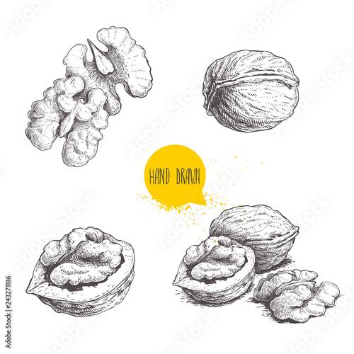 Fotografía Hand drawn sketch style walnuts set