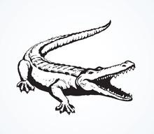 Crocodile. Vector Drawing