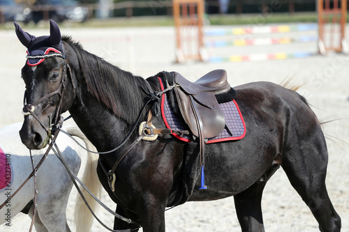 Fototapety, obrazy: Close up of a sport saddle on equestrian event