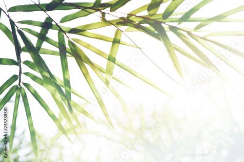 liscie-bambusa-i-swiatlo-sloneczne