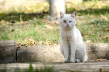 White One-eyed Homeless Cat Sitting