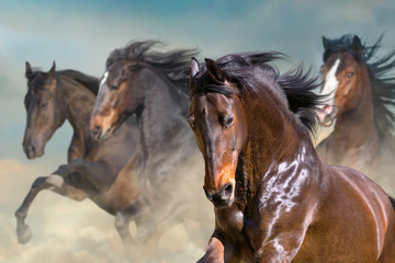 Horse herd run gallop in desert dust against dramatic sky