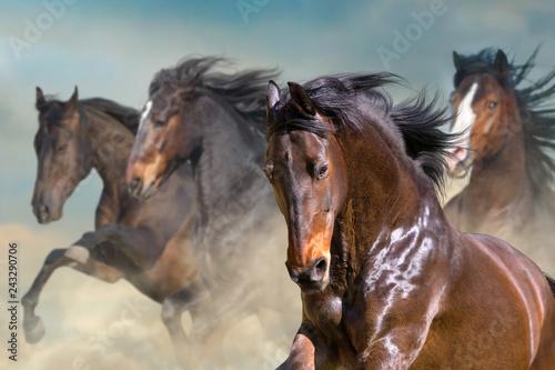 Fototapeta  Horse herd run gallop in desert dust against dramatic sky
