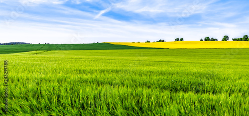 Obraz na plátně Green farm, panoramic view of farmland, crop of wheat on field, spring landscape