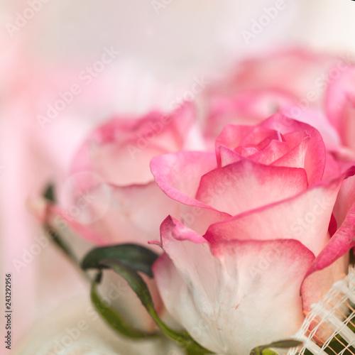 Fotografiet  Blur defocus flower background. Pink roses texture
