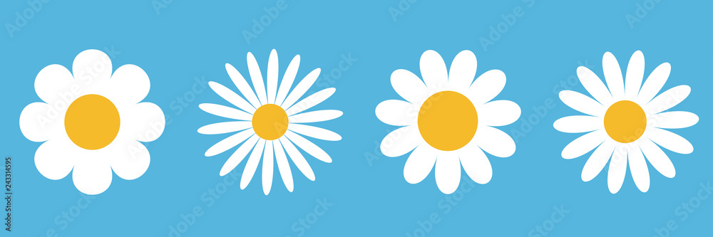 Fototapeta Camomile round icon set. White daisy chamomile. Cute round flower plant collection. Growing concept. Love card symbol. Flat design. Blue background. Isolated.