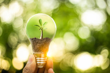 Hand Holding A Light Bulb With Growth Of Tree Inside. Creative Ideas For Earth Day Or Protection Of Environment. Save Energy Of The World
