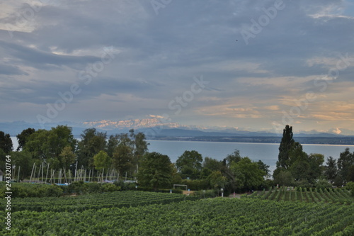 Fotografía  German vine growing area at the Bodensee lake