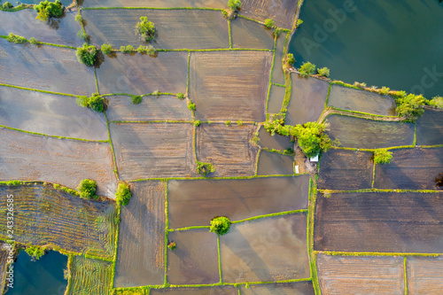 Garden Poster Rice fields Aerial view of agriculture in rice fields to prepare planting. Abstract landscape