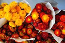 Bunches Of Straw Flowers (xero...