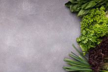Various Greenery On Gray Background, Top View
