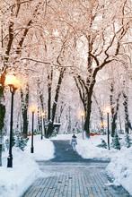 Winter City Park Landscape. Fr...