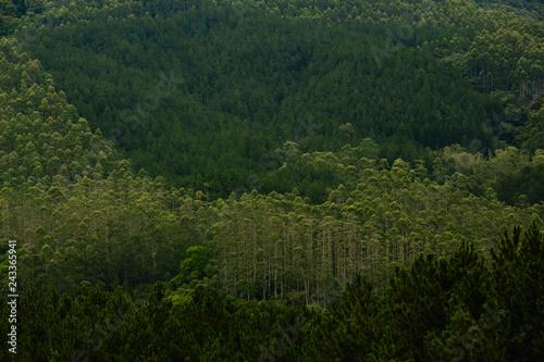 Tuinposter Wijngaard Várias espécies de árvores altas e verdes em uma alta montanha