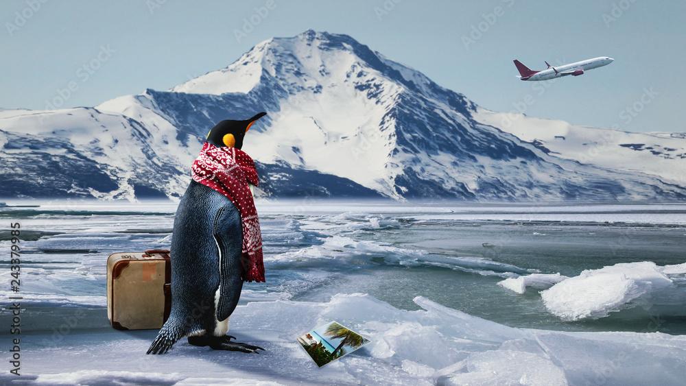 Fototapeta Reiselustiger Pinguin verpasst den Ferienflieger