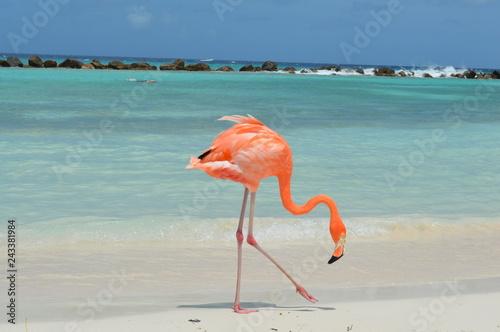 Keuken foto achterwand Flamingo flamingo on the beach