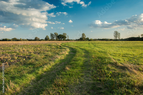 Foto auf Gartenposter Gras Road through a meadow, trees on the horizon and clouds in the sky