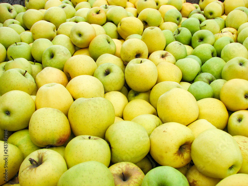 Fotografie, Obraz  Freshly picked Golden Delicious apples in a bin during harvest season