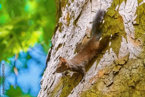 Fotografie, Obraz  Squirrel on Tree
