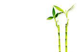 Asia background. Chinese, japanese background. Bamboo branch on white background top view copy space