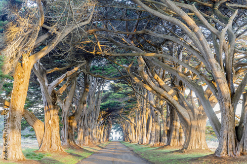 Foto  Sunrise over Cypress Tree Tunnel